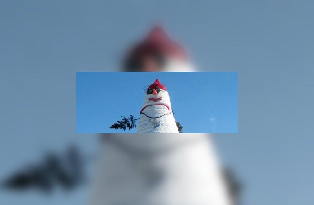 В парке Шнелли открывается снежный городок
