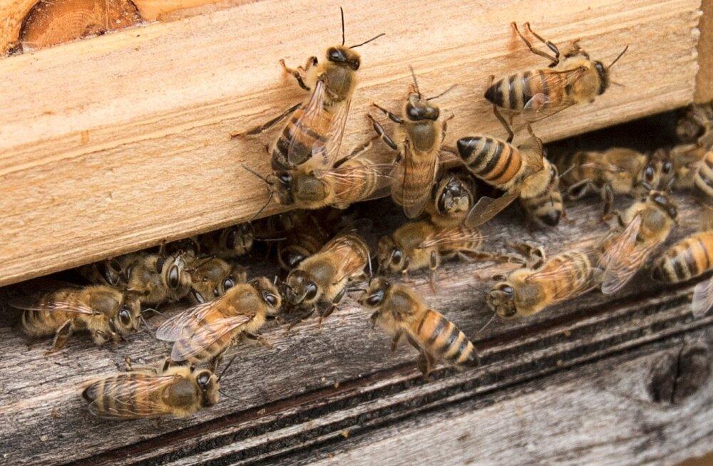 Mesilaste suremise võib põhjustada ka mesinik ise, kui ta kasutab preparaate valesti.