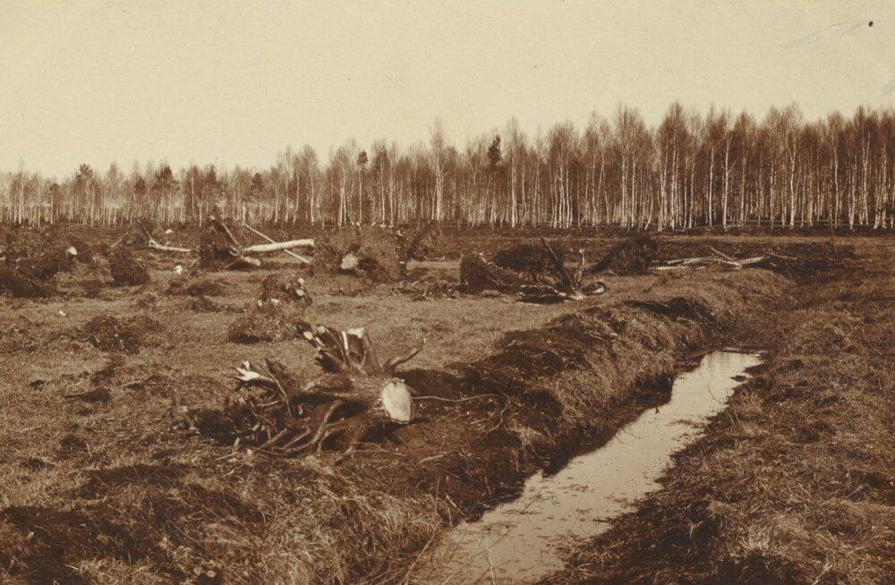 Kuivenduskraavi rajamine umbes 1914. aastal Viljandimaal Kolga-Jaani kihelkonnas.