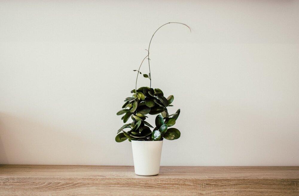 Спальня, гостиная, ванная, кухня: выбираем идеальное растение для каждой комнаты