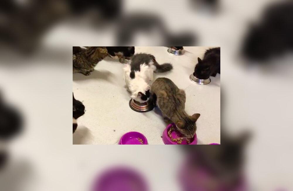 Ulata abikäsi! Paljassaare varjupaigas on kodu ootel rohkem kui 200 kassi