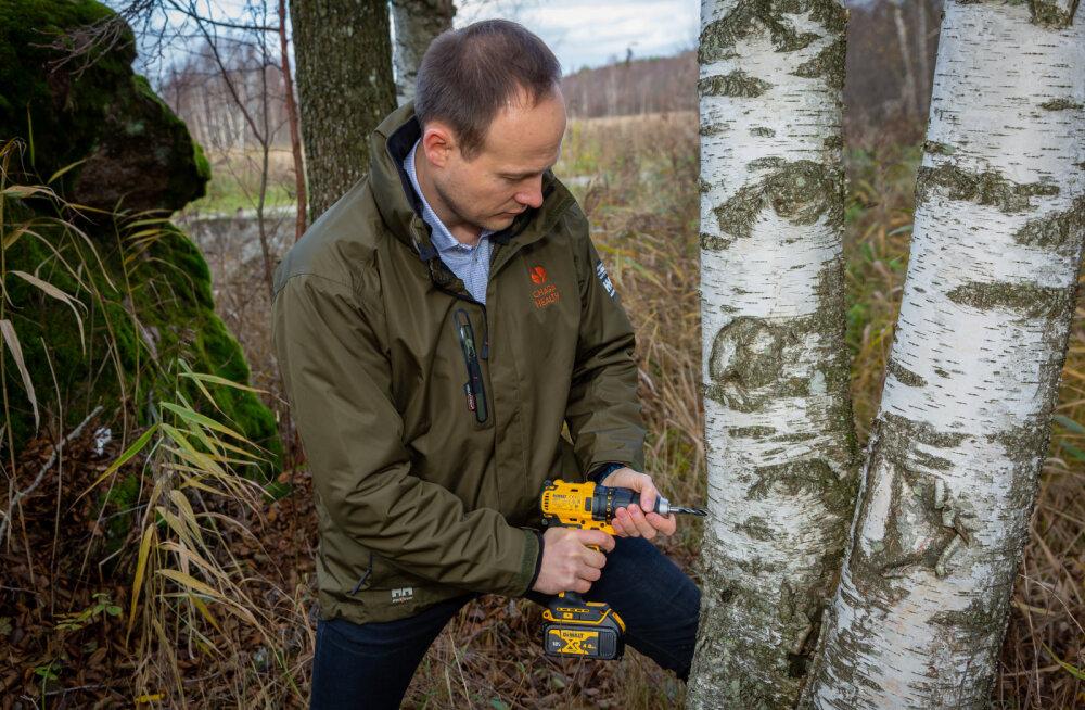 Eestisse rajatakse esimesed musta pässiku ehk <em>chaga</em> kasvandused