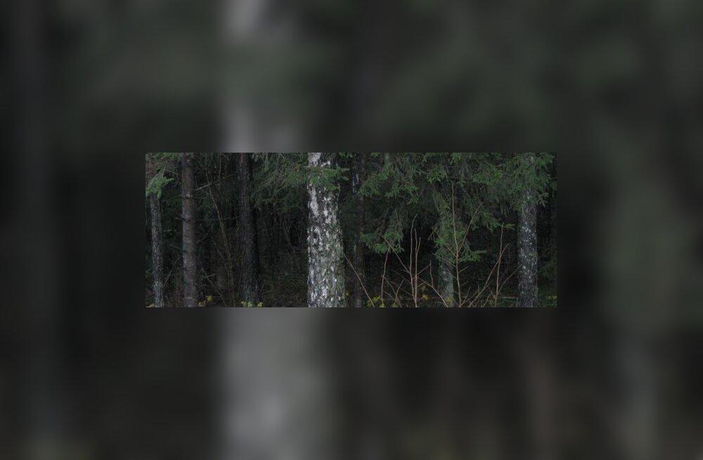 Parbus soovitas Pirita elanikel metsatukk ära osta