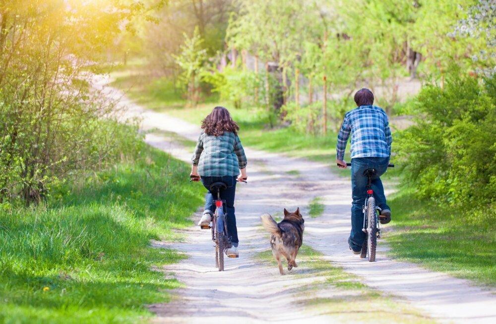 Metsateedel varitsevad koeri silmaga nähtamatud ohud.