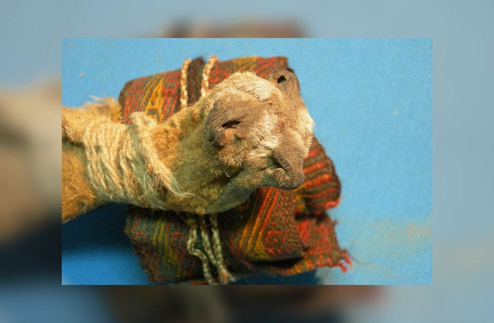 1000 aasta vanune šamaanipaun oli kokaiinist ja ayahuascast pungil