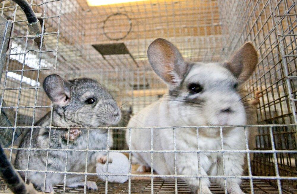 Slovakkia keelustas karusloomafarmid