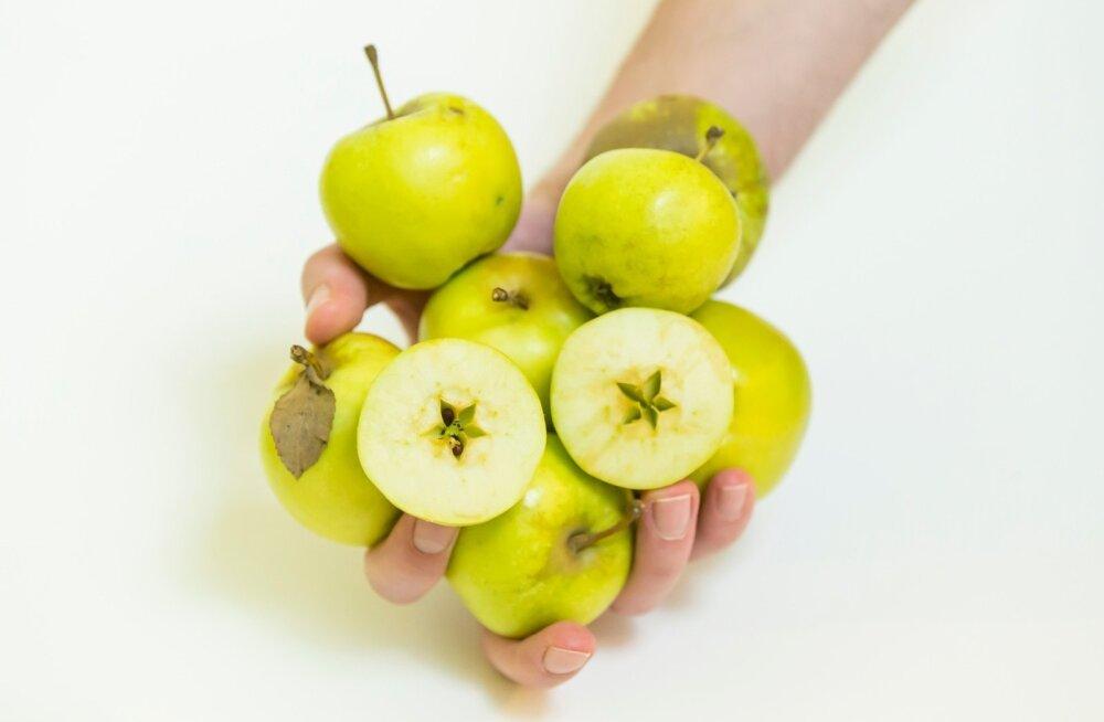 Saaremaa õunad