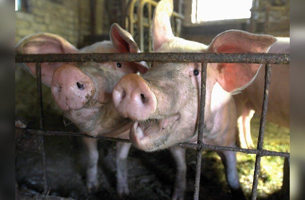 Lihatootjate arengut kammitseb toorme kallinemine
