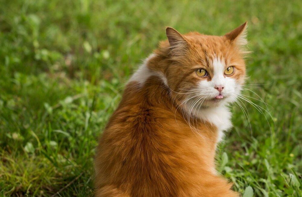 Лайфхак дня: как успокоить буйного кота, который не любит расчесываться