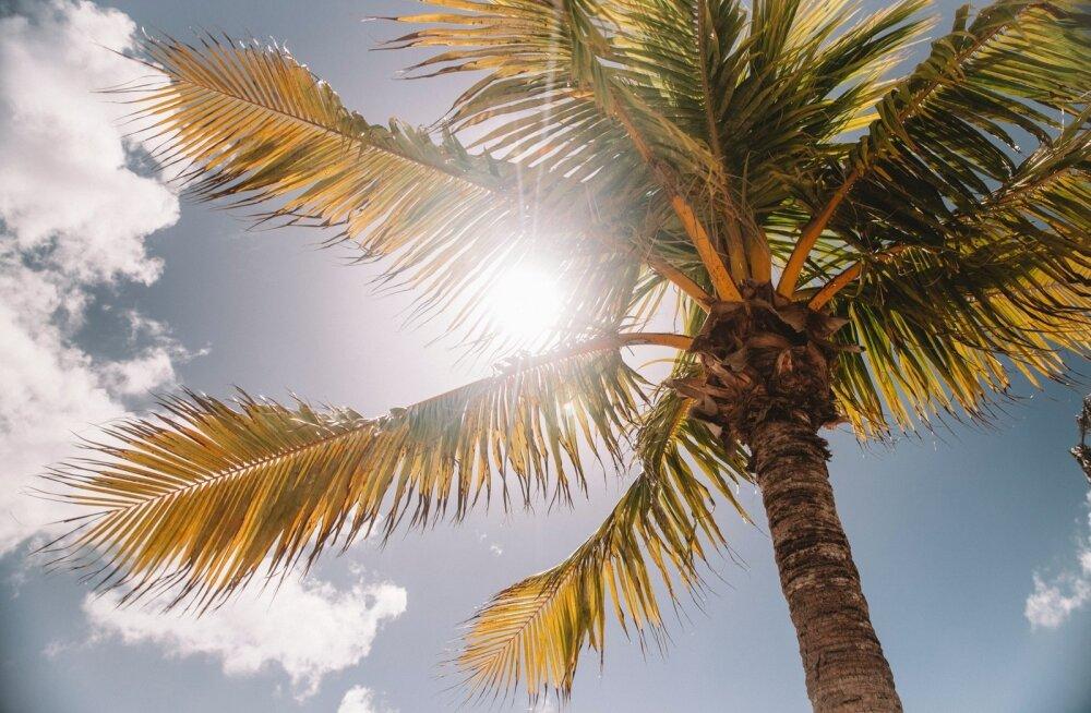 Nädala prognoos: idakaare tuul närtsitab elusat loodust nagu Vahemere maades