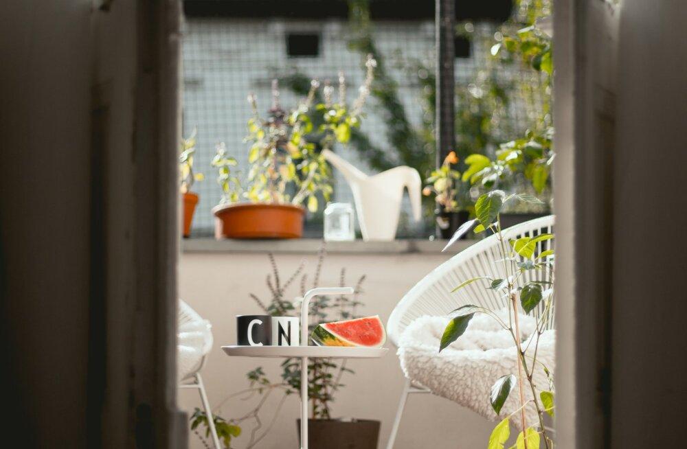 Kui kodust välja minna ei soovitata, on aeg luua kaunis aed rõdule! Ideid, mida ja kuidas rõdul kasvatada