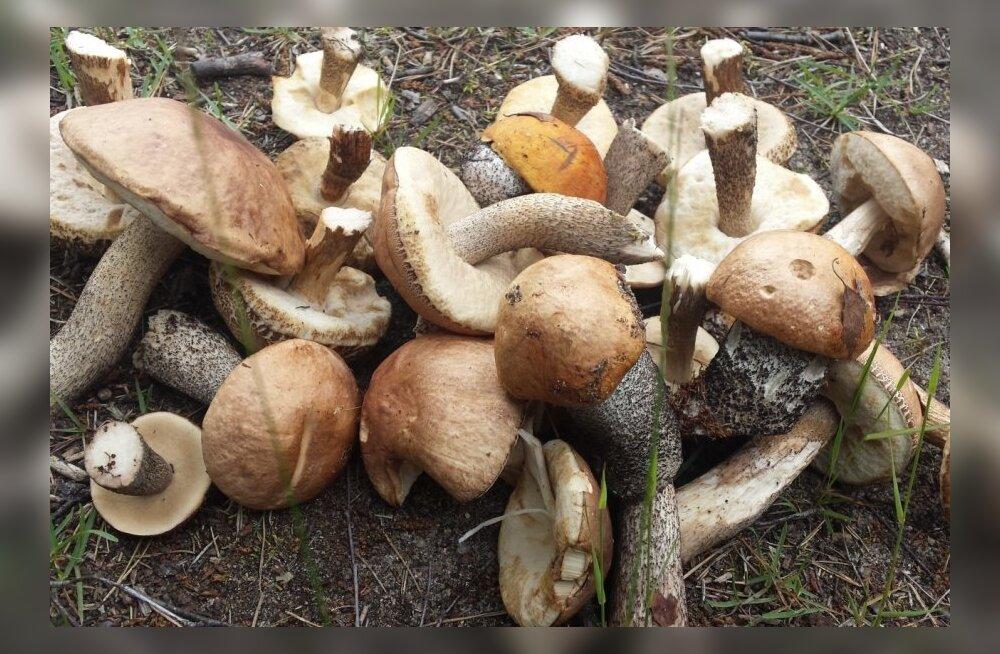 FOTOD: Millised seened on tänavu enim tervisekaebusi põhjustanud