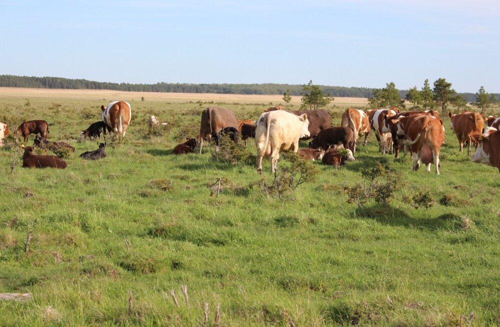 See Ranna talu karjamaa on PRIA hinnangul hoopis mets ja seega ühtset pindalatoetust ei saa.