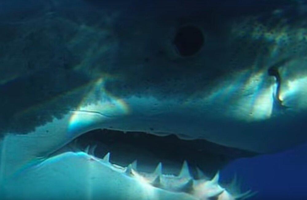 VIDEO, mis lööb pahviks | Kaamerale püütud kohtumised megalodoniga, kes peaks ju ometi olema välja surnud...