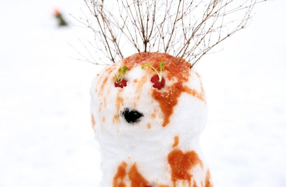 lumememmede ehitamine Väätsal