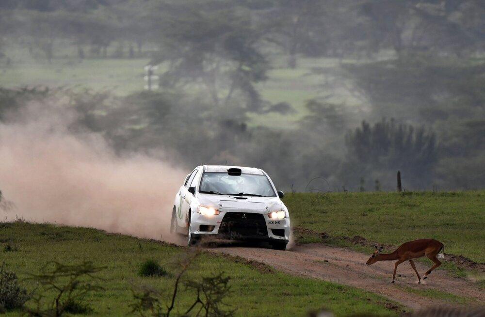 VIDEO   WRC-sarjast unistaval Safari rallil jõudis omal jõul finišisse vaid kaks masinat