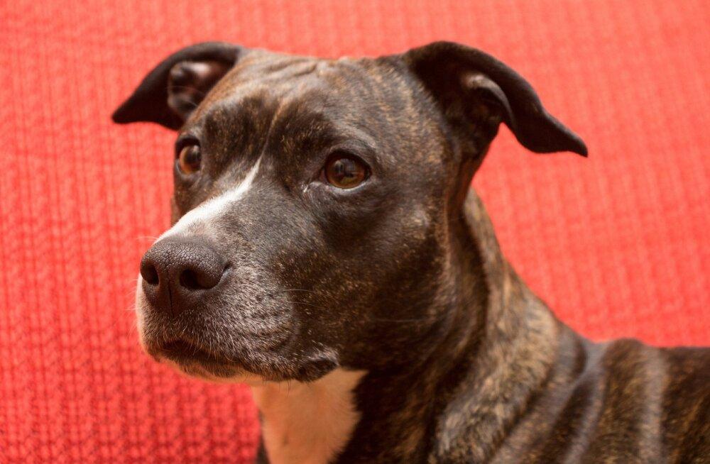 EKL keeldus kutsikate heaolu ja Eesti seaduseid eiranud koeraomaniku pesakonnale tõutunnistusi väljastamast