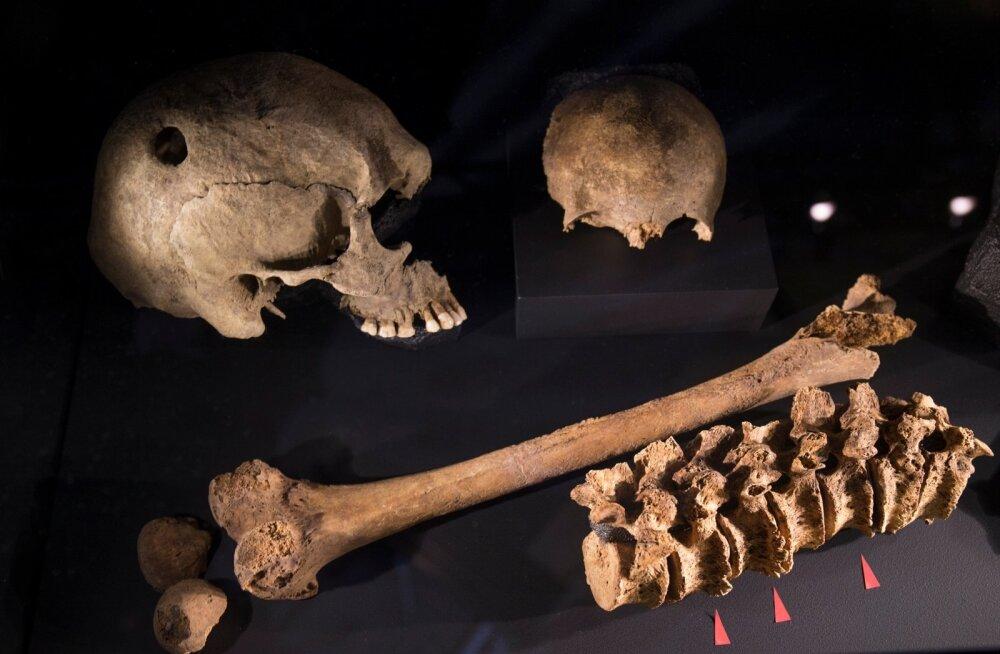 """Rootsi Ajaloomuuseumi koostatud suurnäitus """"Viikingid: elu legendide taga"""" Lennusadamas"""