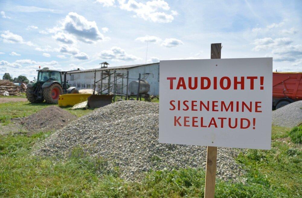 VTA direktori asetäitja: seakatku jõudmine Saaremaale on kummaline