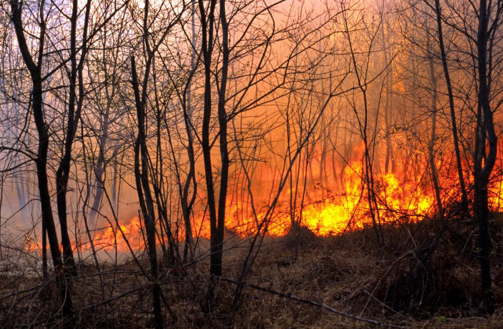 Tulekahjud on Austraalias nõudnud juba üle poole miljardi looma elu