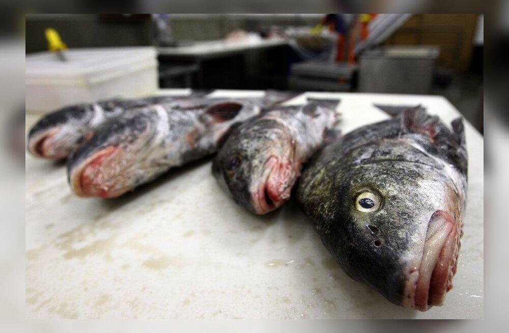 Kalakasvatajate toetus küsimärgi all