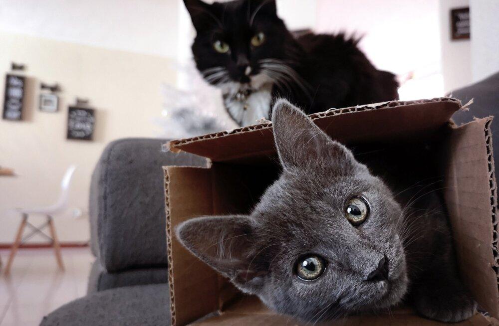 5 veidrat tegevust, mida kassid armastavad