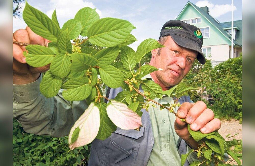 Seedri Puukool pakub põnevaid taimi