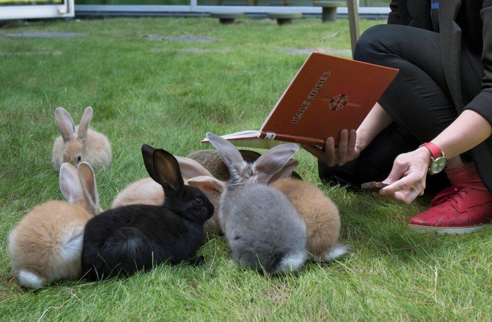 Sõmeru raamatukogu lugemisjänesed