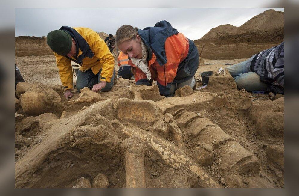 Prantslased kaevasid kogemata terve mammuti välja