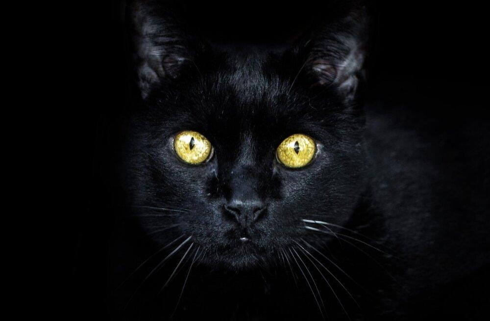 Varjupaikade MTÜ kampaania: oktoobrikuus on juba 29 musta kassi uue kodu leidnud