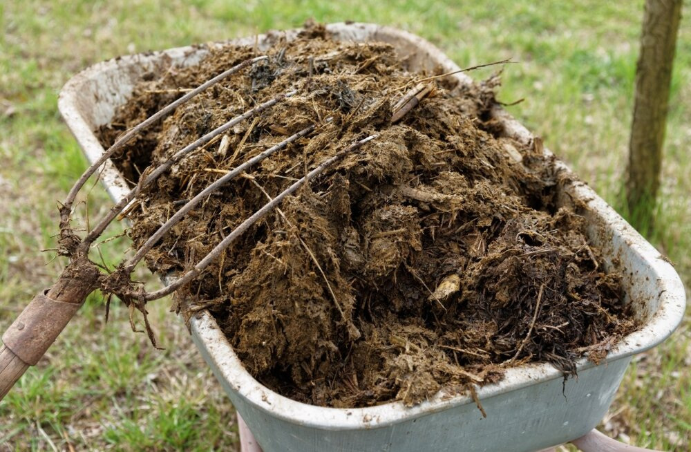 Kui palju toitaineid selline sõnnikuhunnik sisaldab ja kuhu need veel lähevad peale põllu, vajab uurimist.