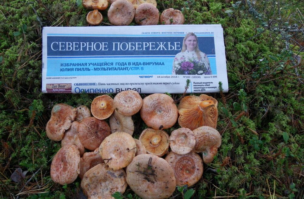 ФОТО читателя Delfi: Еще грибами пахнет лес...