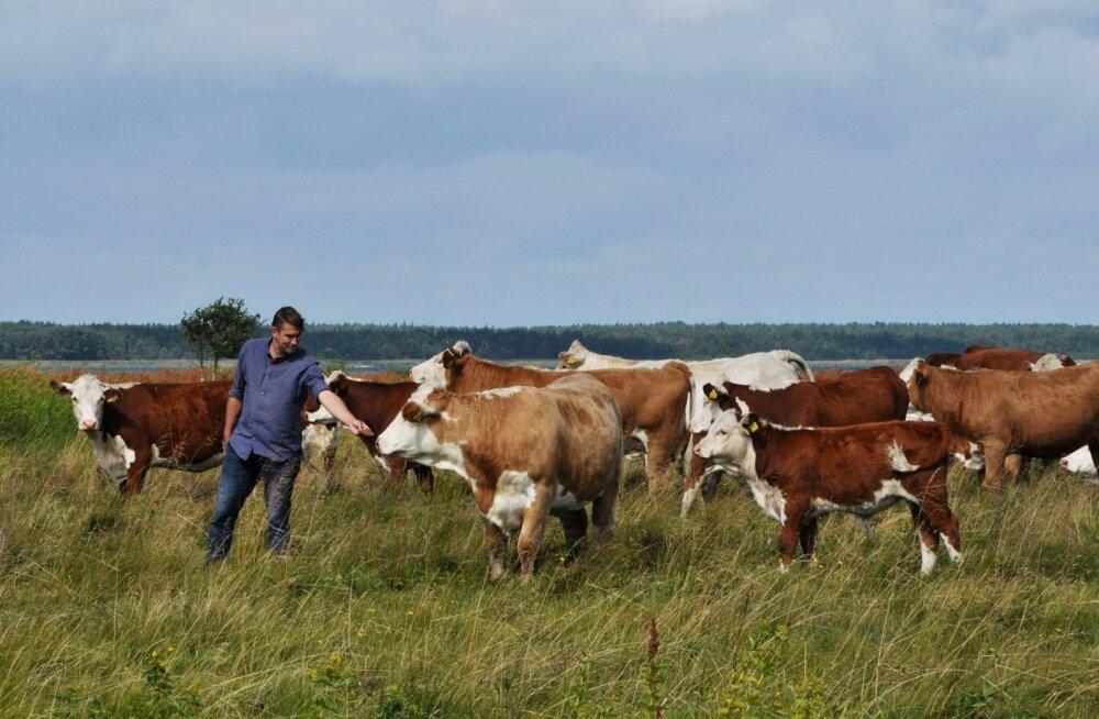 Priit Kuusk on veendunud, et veis on avastamist väärt, sest veiseliha on väga maitsev.