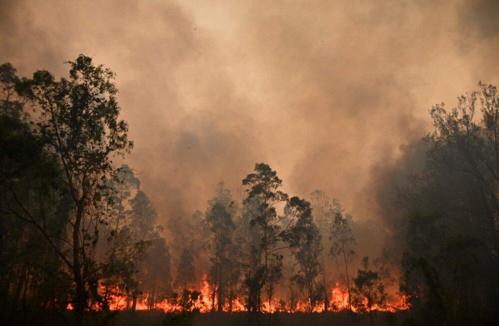 VIDEO   Ulatuslikud metsapõlengud ähvardavad Austraalia ralli ära jätta