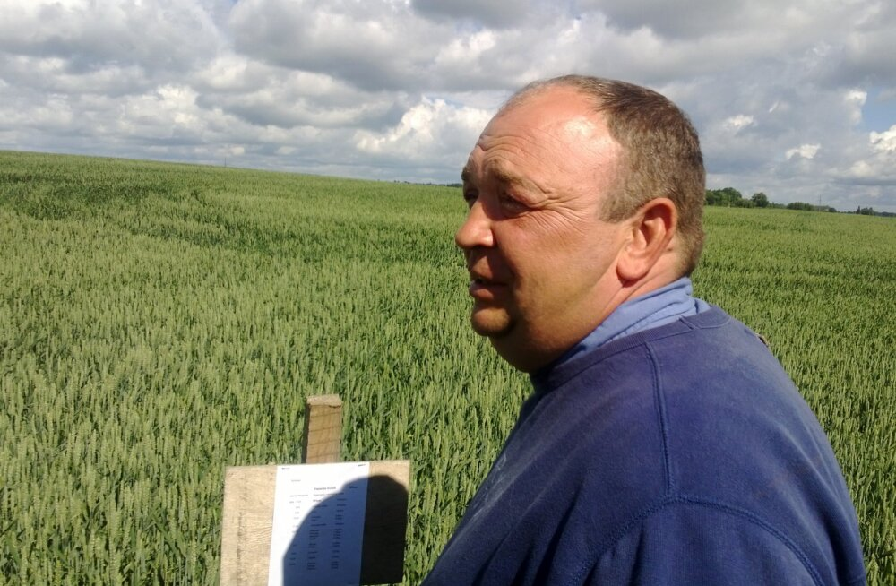 Läti viljelusvõistluse Zelta Lauks tänavune nisurekord oli 12 tonni