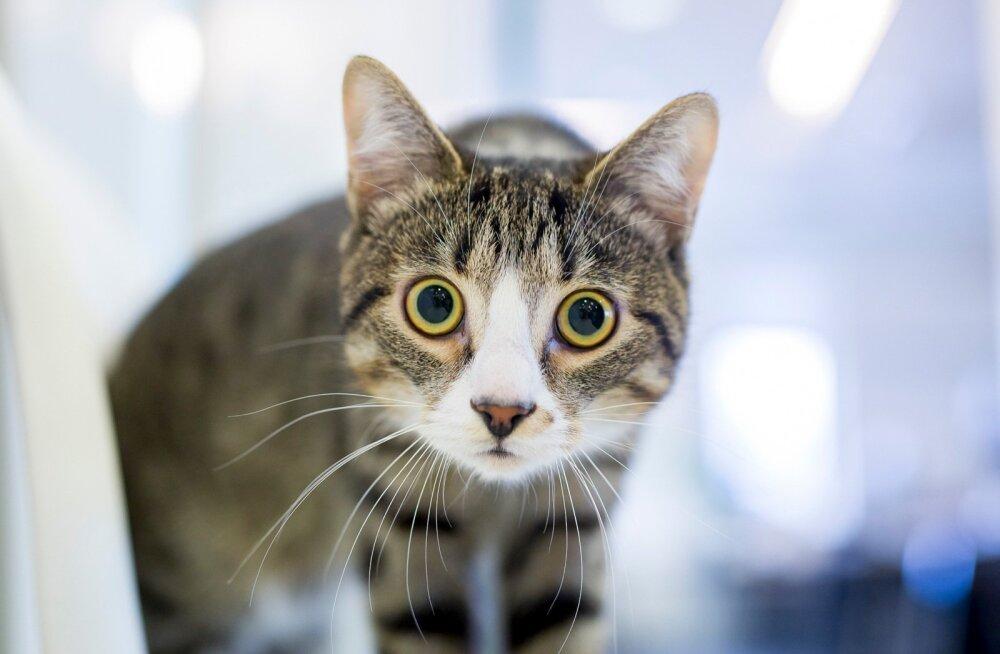 В Новой Зеландии предложили запретить кошек — они оказались слишком опасными хищниками