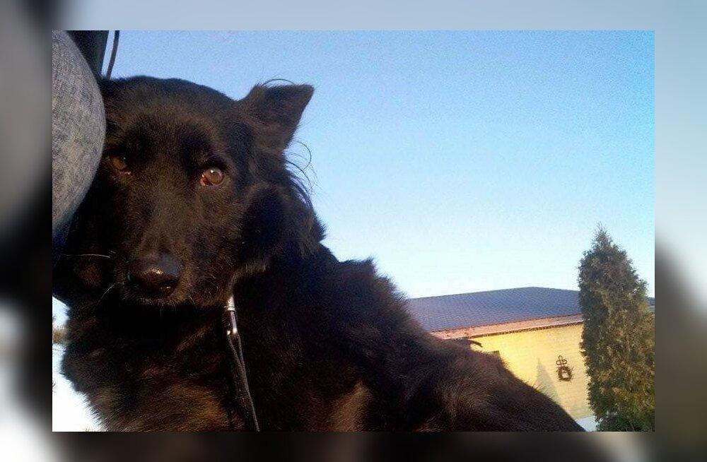 Triinu lugu: koer, kes kartis kõike ja kõiki, kuni arstivisiidil selgus tema hirmude tegelik põhjus