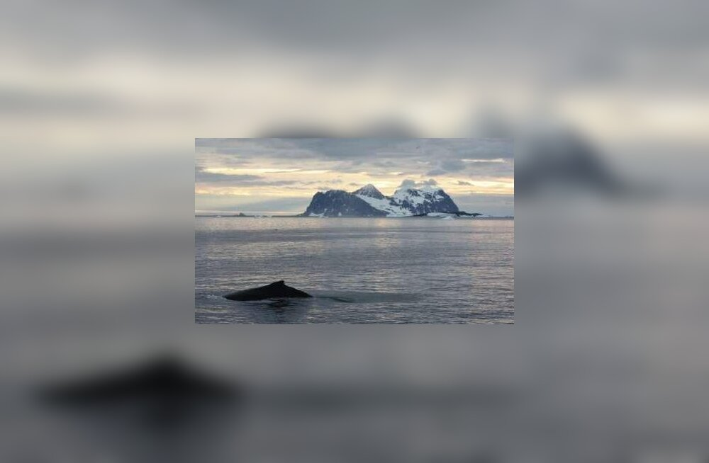 Antarktis jääb ilma Kaliningradi oblasti suurusest liustikust