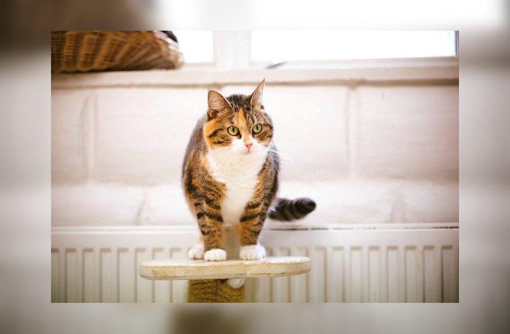 Merida lugu   kass, kelle koduootus on kestnud juba 1092 päeva