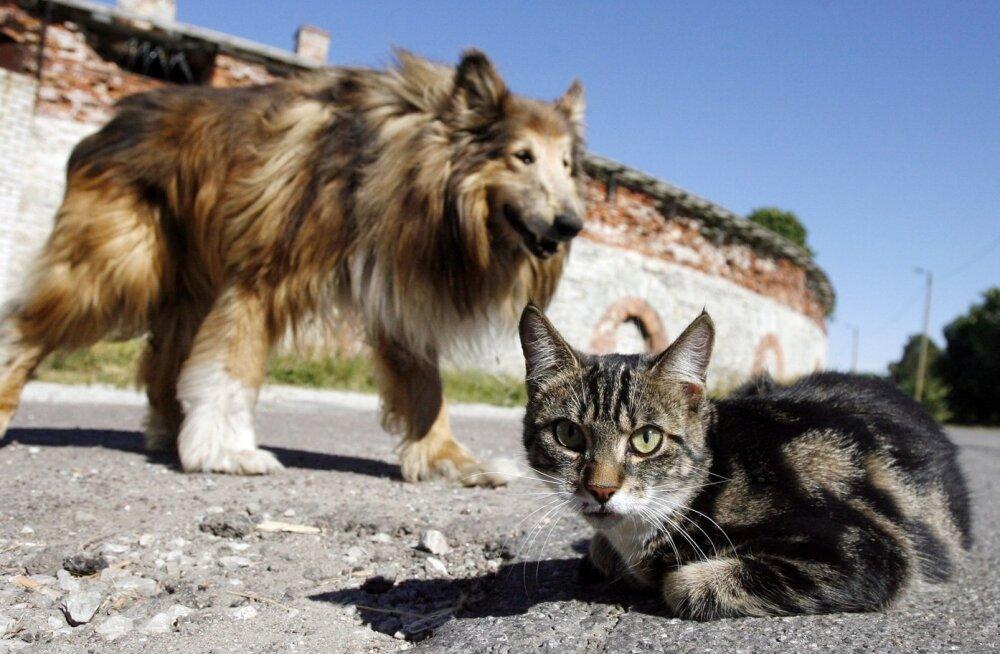 Koeraomanikud naersid ja filmisid, kuidas nende lemmikud kassiga jalutanud naist ründasid