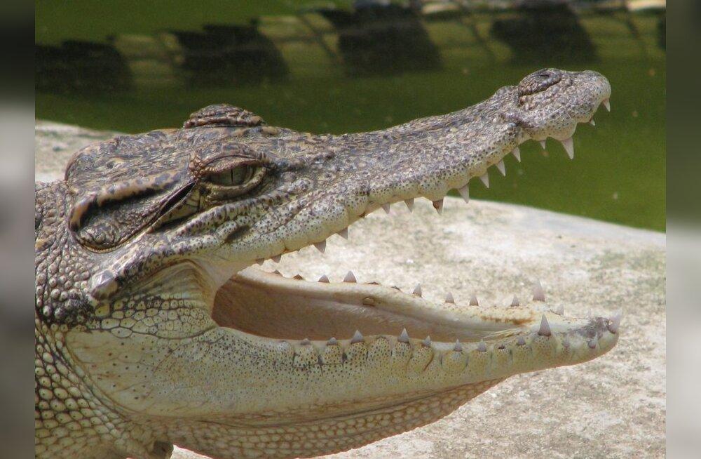 Крокодил из мусульманского храма в Бангладеш загрыз насмерть паломницу