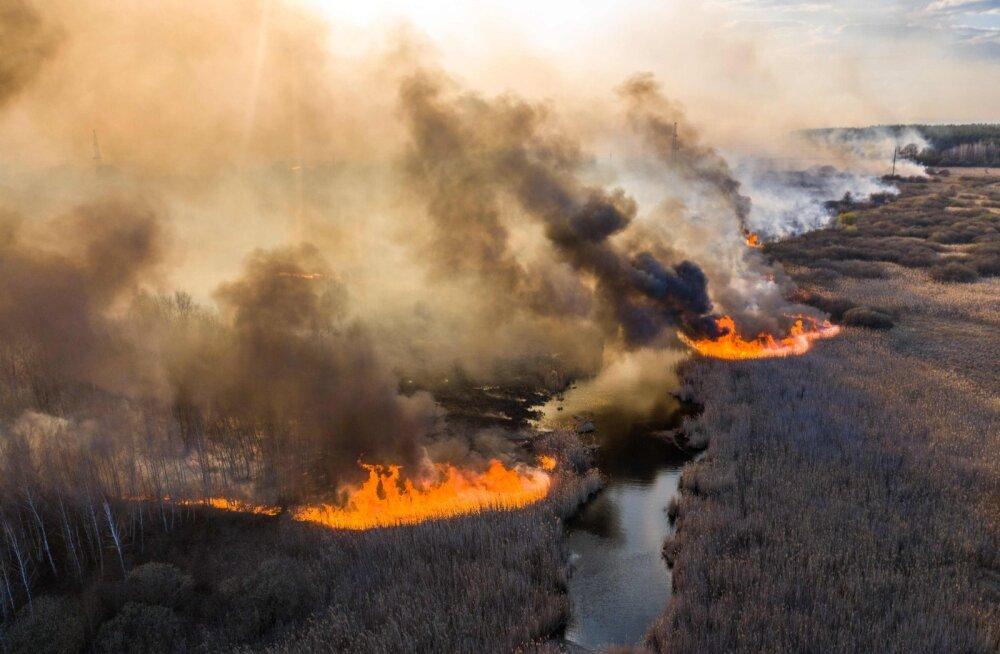 Tšernobõli eritsoonis põlev radioaktiivne mets kergitab kiirgustaset