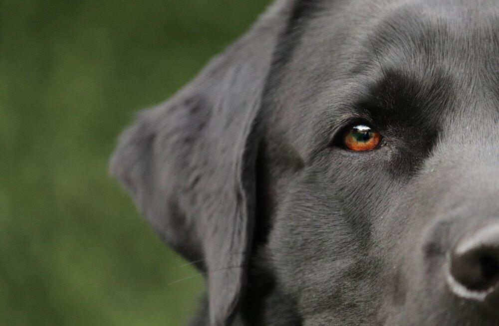 Порода, которая собрала все лучшие рейтинги. Самая добрая собака в мире!