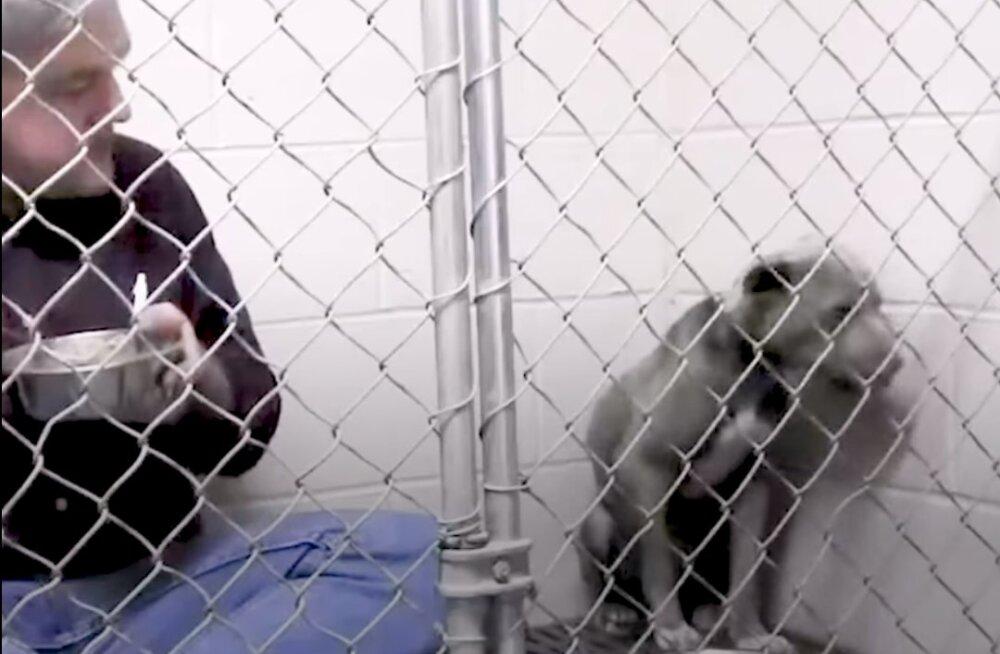 Südamlik VIDEOLUGU | Pühendunud loomaarst istus koeraga koos päevi puuris, et loom sööma hakkaks ja end viimaks ometi turvaliselt tunneks