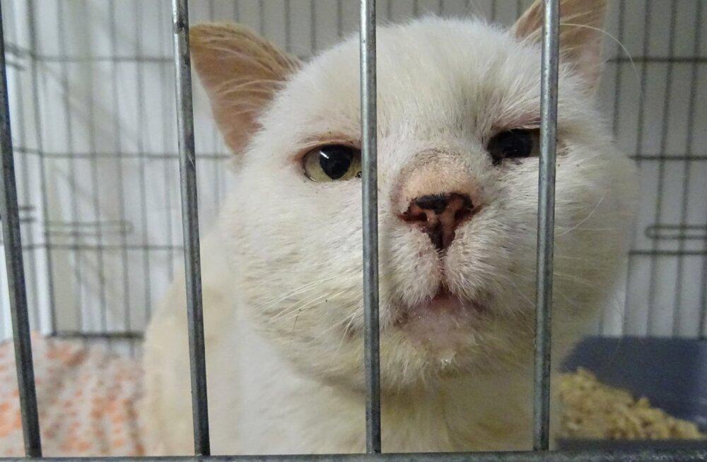 Ühe abivajaja lugu   Filipi hinges peitub igatsus: kas see kass üldse teab, mida tähendab hubane, hooliv ja armastav kodu?