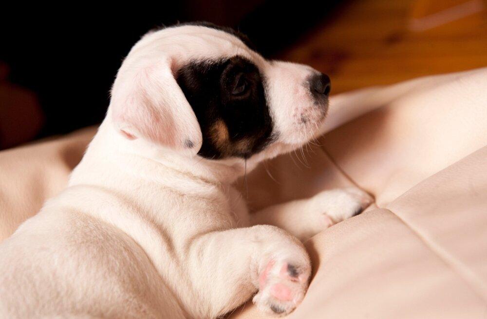 Полиция спасла маленького щенка от жестокого хозяина: возбуждено уголовное дело