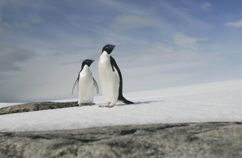 Peidetud tulemäed: Antarktika jääkilbi alt avastati maailma suurim vulkaanidevõrgustik