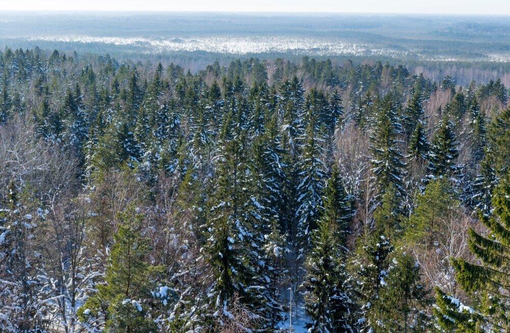 Vaade metsadele vaatetornist