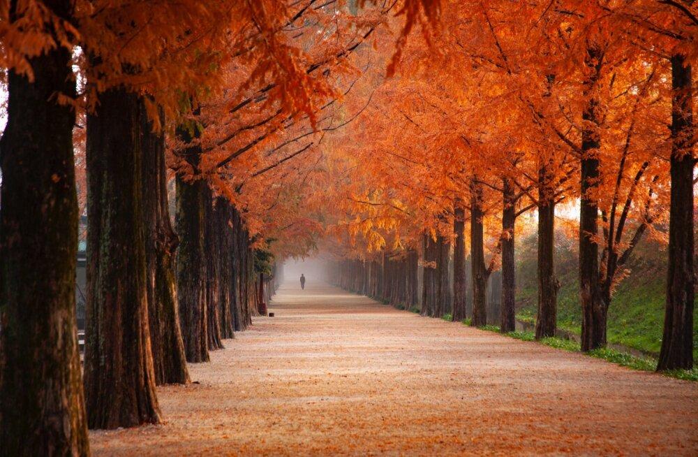 Прогноз Василисы Володиной на вторую половину октября: что ждет нас в любви, делах и финансах