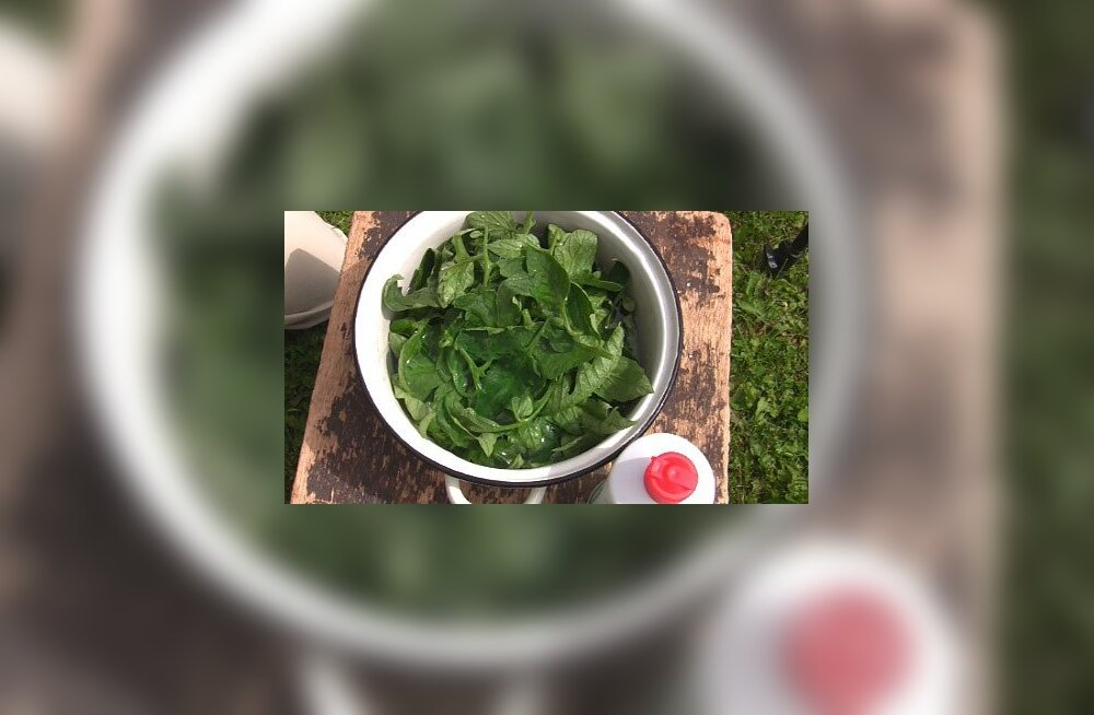 Lehetäide vastu aitab nõgeseleotis, roheline seep ja Coca-Cola